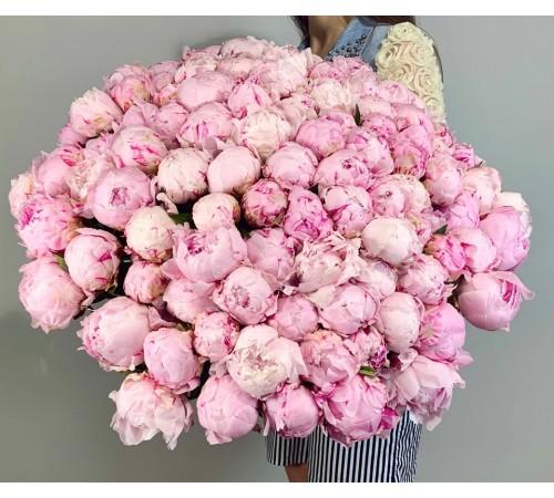 101 Пион розового цвента