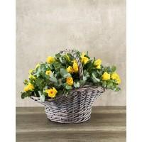 25 желтых роз (Россия) в корзине