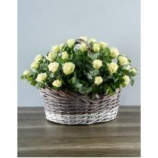 35 роз (Россия) белых в корзине