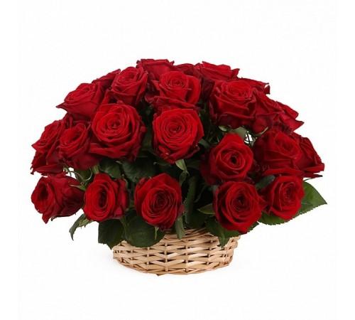 35 роз (Эквадор) в корзине