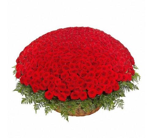 501 роза (Эквадор) в корзине