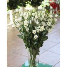Белые лизиантусы