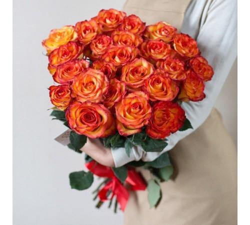 25 Элитных роз сорта High Magic (Эквадор)