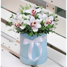 Орхидеи в шляпной коробке